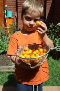 Nano and tomatoes